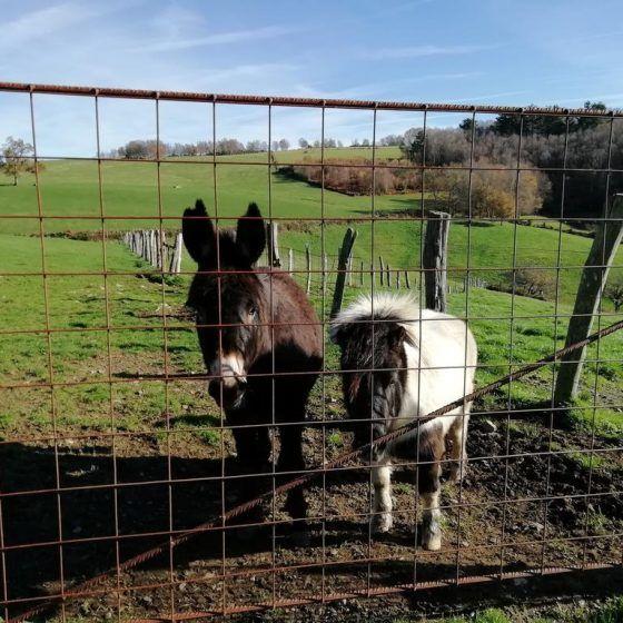 Burro y pony